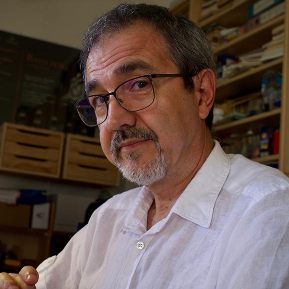 Mauro Zuccante